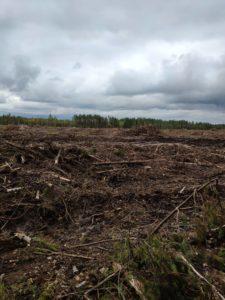 топосъемка после выкорчевывания деревьев